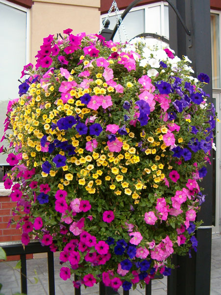 Mini Grand Floral Displays On Pinterest Hanging Baskets